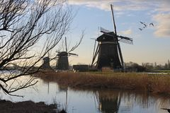 Winter dutch landscape with 3 mills and flying birds stock image