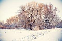 Winter dutch park Royalty Free Stock Photo