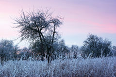 Winter early evening. Winter landscape after sunset with red sky Royalty Free Stock Images