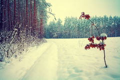 Winter at the edge of the forest Royalty Free Stock Photo