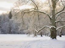 Winter-Eiche Lizenzfreie Stockfotos
