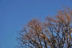 Winter-Eiche stockbilder