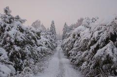 Winter in einem enormen Park mit Bäume bedeckt mit Schnee lizenzfreie stockfotos