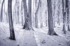 Winter in einem gefrorenen Wald Lizenzfreies Stockfoto