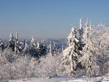Winter in einem Wald Stockfotos