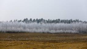 Winter eingefroren, eisige ländliche Landschaft Lizenzfreie Stockfotografie