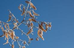 Winter eisig Lizenzfreie Stockfotografie