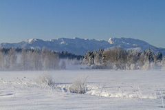 Winter in Ellbach moorland  Royalty Free Stock Photos