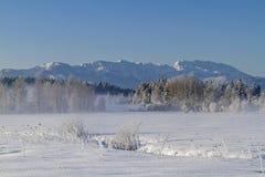 Winter in Ellbach moorland  Royalty Free Stock Photos