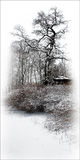 Winter etude Stock Photos