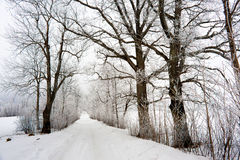 Winter in Europe. Rural winter road in Eastern Europe Royalty Free Stock Images