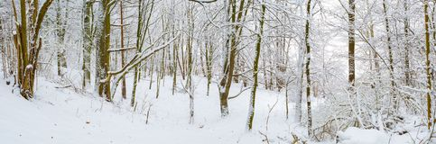Winter in european forest Stock Image