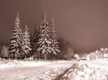Winter evening. Royalty Free Stock Image