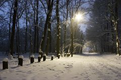 Winter evening. Cold winter evening in city park Stock Images