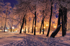 The winter evening in the city park Royalty Free Stock Photography