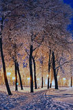 The winter evening in the city park Royalty Free Stock Images