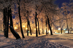 The winter evening in the city park Royalty Free Stock Image