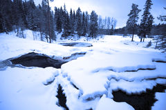 Winter evening in deep forest Stock Images