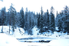 Winter evening in deep forest Royalty Free Stock Photo