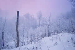Winter Evening Forest Royalty Free Stock Photos