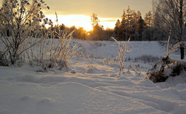 Winter evening in the forest. Frosty winter evening in the forest Royalty Free Stock Image