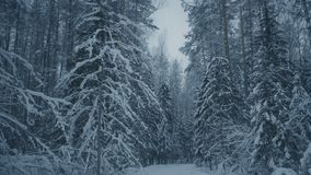 Winter evening in forest stock video footage