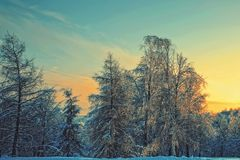 Winter evening landscape Stock Image