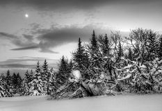 Winter evening landscape with moon Royalty Free Stock Photo