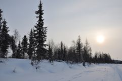 Winter evening landscape with snow, forest and cold sun. Frosty sundown Royalty Free Stock Photos
