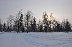 Winter evening landscape with snow, forest and cold sun. Frosty sundown Royalty Free Stock Photo