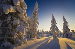 Winter Evening Landscape with tree. Forest, snow, sun and shadows Stock Image