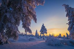 Winter Evening Landscape with tree. Forest, snow, sun and shadows Stock Photo