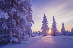 Winter Evening Landscape with tree. Forest, snow, sun and shadows Royalty Free Stock Photos