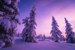 Winter Evening Landscape with tree. Forest, snow, sun and shadows Stock Photography