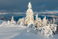 Winter evening mountain snowy landscape. Evening winter calm mountain landscape with beautiful frosting trees and snowdrifts on slope Carpathian Mountains Royalty Free Stock Photography