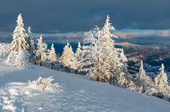 Winter evening mountain snowy landscape. Evening winter calm mountain landscape with beautiful frosting trees and snowdrifts on slope Carpathian Mountains Stock Image