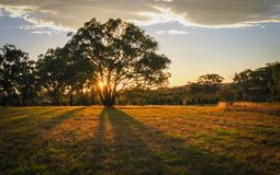Winter Evening at outer skirt of Mulligan Flats Nature Reserve, Australian Capital Territory royalty free stock photos