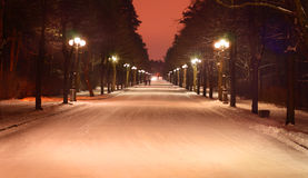 Winter evening in the park Royalty Free Stock Photography
