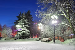 The winter evening in the park Stock Photography