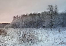 Winter evening scene Royalty Free Stock Images