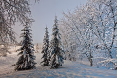 Winter evening Royalty Free Stock Photos