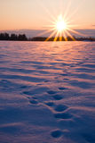 Winter evening sunset and foot prints in snow royalty free stock photos