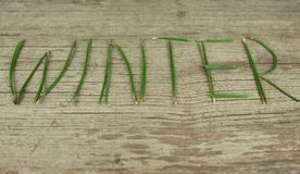 Winter Evergreen Sprigs on Rustic Wooden Board royalty free stock photos