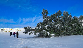 Winter expedition. Three people on expedition, walking on a snowy landscape in winter royalty free stock image