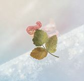 Winter fairy. Leaf flying in the sky with a fairy as a passenger Royalty Free Stock Photos