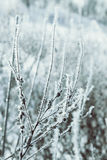 Winter fairy background Royalty Free Stock Photos