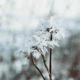 Winter fairy background Royalty Free Stock Photography