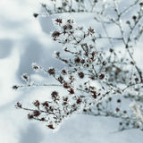Winter fairy background Stock Photography