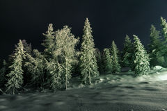 Winter fairy forest at night. Trees in winter forest in the moonlight Royalty Free Stock Photo