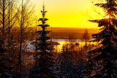 Winter fairy forest at sunset Stock Photos